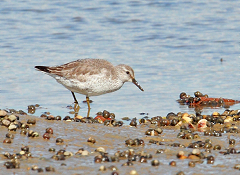 knot wader photo