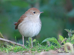nightingale England