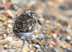turnstone Church Norton