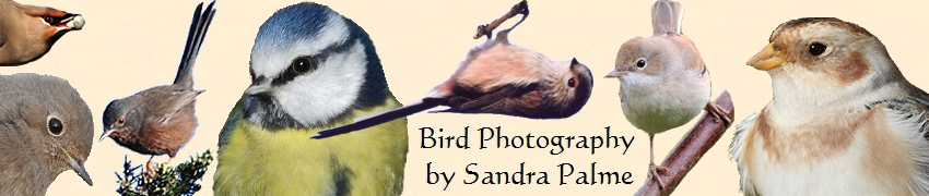 bird photography Sandra Palme